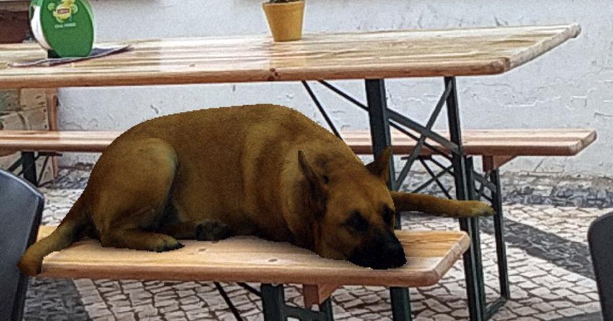 Vaadake, kuidas kasutada Instagrami koerafiltrit Sasha Dog
