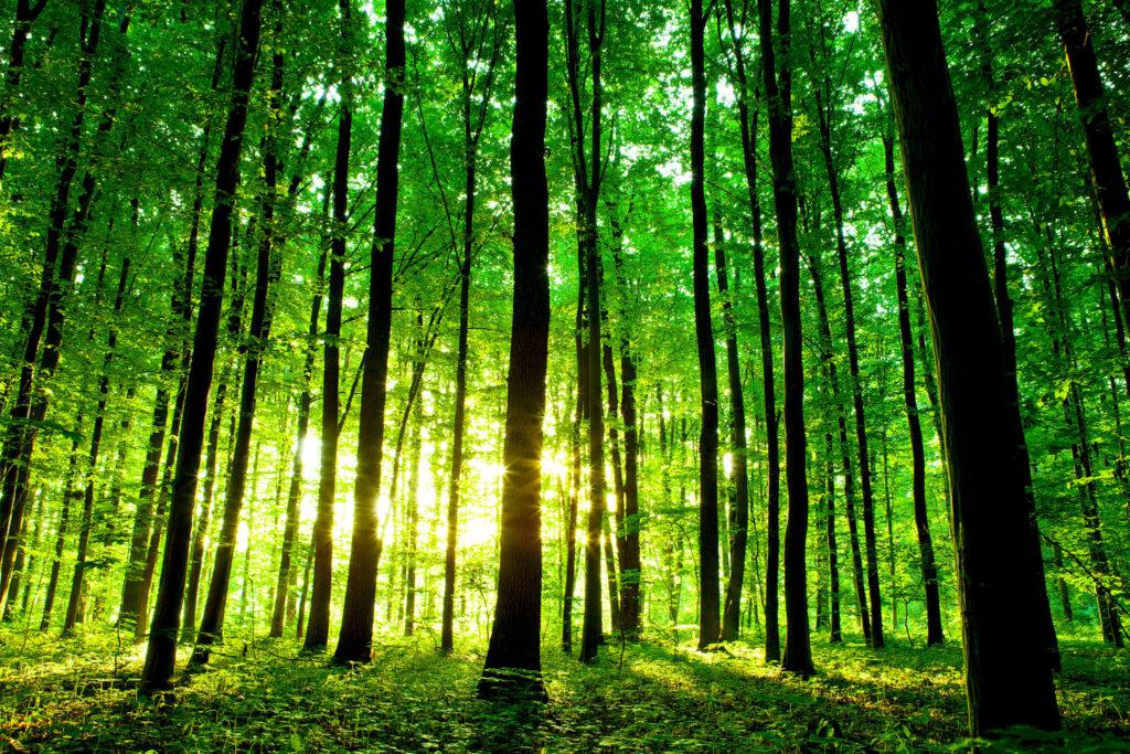 Apple Forest: San Franciscoga sama suur ala loob töökohti, säästvaid materjale ja loodushoidu