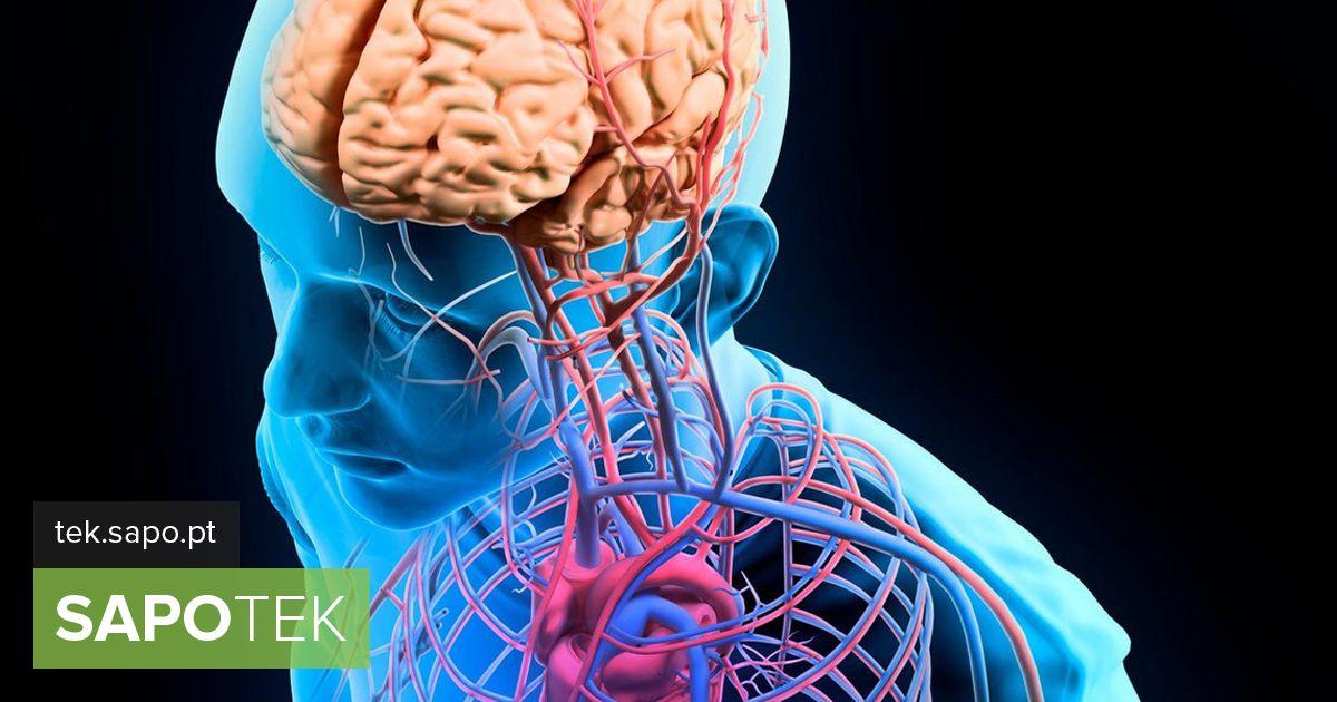 Lisateavet inimese anatoomia kohta saate rakenduse kaudu